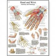 Εκπαιδευτική αφίσα άκρας χειρός & καρπού 3B Scientific